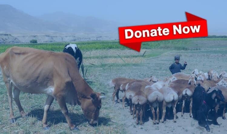 Qurbani Appeal - Qamar Charity Foundation